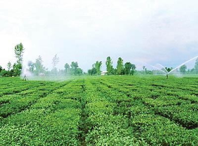 زمین کشاورزی دزفول
