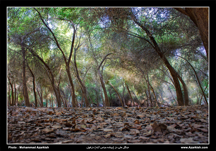 جنگل ملی دز